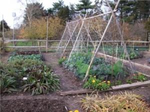 vegetable_garden_194668