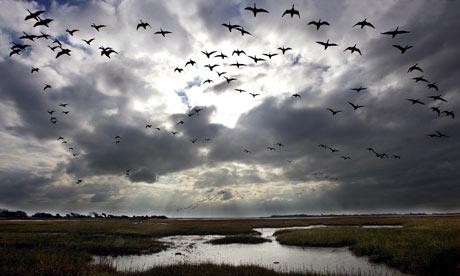 Migrating-birds-001