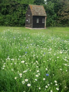 Wellhouse-Meadow-annuals